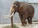 P�esun Mekonga do jin� zoo je jen ot�zkou �asu.