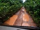 V Kamerunu brzy za�ne obdob� de���, na dal�� j�zdu se Toulav� autobus vyprav�...