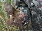 Ornitologové zkontrolovali u rybníka Zrcadlo na Jičínsku stovky tažných ptáků.