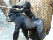 Pro Bikiru je �as strávený s malým Nuruem velmi cenný - u�í se, jak zacházet s...