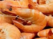 V Brn� a Olomouci se ryby v prodejn�ch Ocean48 dost�vaj� v �ad� p��pad� na pult...