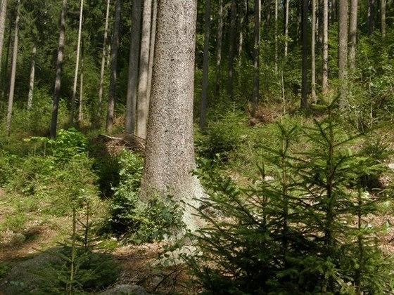 Proč se lidé vracejí k topení dřevem? Ničíme tím naše lesy a zeleň?