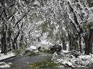 Calgary zaskočily sněhové bouře.