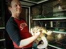 Momentálně má doma Karel Zavadil šest nebezpečných hadů.