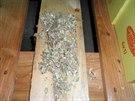 Státní zemědělská a potravinářská inspekce našla ve skladu Kauflandu myší trus...