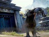 Sloni la�ní po lidské krvi
