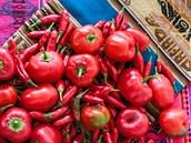 �ást sklizn� z prvního roku p�stování: lusky ve tvaru jablí�ka jsou papri�ky...