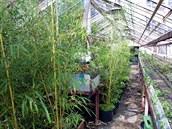 P�stitelka p�i�la b�hem chvíle zhruba o stovku kus� bambus�. (ilustra�ní foto)