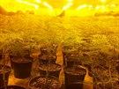 V odhalené pěstírně kriminalisté objevili přes tisíc rostlin konopí