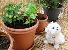 Pokud máte psa, jako Miranda s Eduardem, obytný balkon jistě také uvítá.