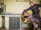 Policejní pes prohledává prostory pardubické univerzity, v nichž by se dle...
