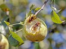 Sr�ní sklízí úrodu..krásy podzimu
