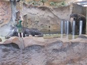 Sloni v �steck� Zoo