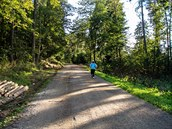 Lesní cesta Červená