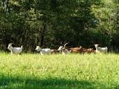 Kozy u občerstvení