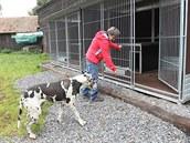 Útulek pro psy z m�sta i okolí funguje ve ��á�e nad Sázavou devatenáct let....