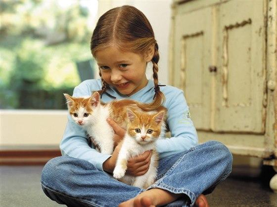 Jak správně krmit kočku?
