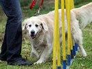 """Pro letšní ročník jsme připravili 12. soutěžních """"Disciplín psa Ruperta"""", zde..."""