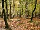 Hluboké lesy irského národního parku Tollymore Forest Park