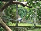 V domě na předměstí indonéského Bekasi na západní Jávě bydli rodina se dvěma synky.