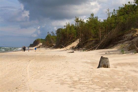 Příbřežní porost dřív nebo později podlehne postupujícím písečným dunám nebo...