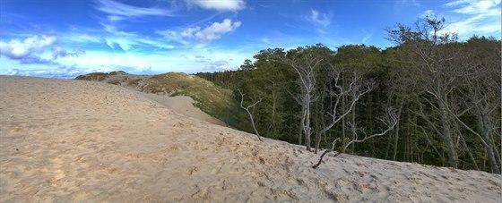 Neustále postupující písečné duny postupně ukrajují zrozlohy okolního lesa a...