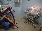 """Harfenistka, která sama prošla """"Systémem"""" hraje miminku v inkubátoru na..."""