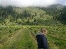 Jen letos bylo na třešňové farmě vysazeno sedmdesát tisíc nových stromků.