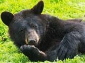 �Sn�zte je� láká americký ú�ad pro ochranu p�írody na �estidenní loveckou...