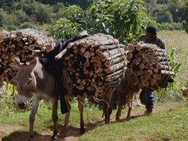 Odlesňování lesa Mau v praxi
