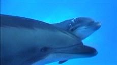 Porod delfíního mlád�te