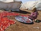 Syrská uprchlice suší papriky v táboře v Azazu, který leží poblíž tureckých hranic (27. října 2014).