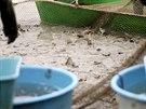 V Jedovnic�ch na Blanensku se konal v�lov rybn�ka Ol�ovce. Na akci dorazilo...