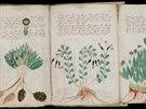 Vojni��v rukopis obsahuje i kresby rostlin, kter� v doty�n� dob� nemohly v...
