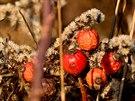 kouzelný podzim v Brn� a okolí