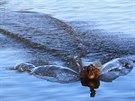 p�istání na hladin� rybníka