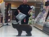 Pohled na policistu s p�epravním boxem v ruce byl z�ejm� impulsem k út�ku...