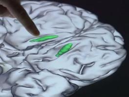 Nervové buňky, které se vyvíjejí po celý život člověka (olfactory ensheathing...