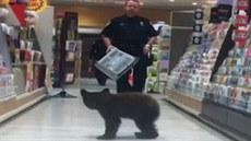 Medv�d na nákupech