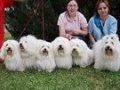 Pejsci z chovatelské stanice Best of coton na pikniku