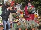 Dušičky se blíží, před hřbitovem v Ostravě-Vítkovicích už stojí 55 prodejců....