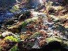 Podzim v údolí �eky Doubravy v �elezných horách.