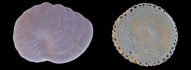 Výsledná fotografie p�ti zrnek nar�ov�lého písku ze zátoky Balos na Krét�....