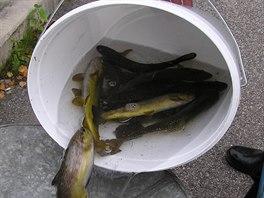 Výlov chovného potoka Ledhujka na Broumovsku v roce 2003, kdy tam ještě ryby byly.