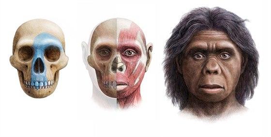 Rekonstrukce podoby první nalezené na základě její lebky.