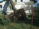 Hasiči během noci vyjížděli k více než sedmdesáti případům, většinou museli odstraňovat popadané stromy (5. listopadu 2014).