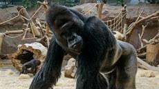 Richard je neskonale impozantní zví�ecí osobností pra�ské zoo. V ned�li (9. 11....