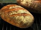 Český řemeslný chleba se odlišuje tmavší kůrkou než průmyslově vyráběné varianty.