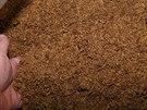 Celníci našli v hospodářské budově rodinného domu v Lánech na Kutnohorsku 3,5 tuny řezaného tabáku a 85 kilogramů tabákových listů