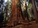 President. Národní park Sequoia v ji�ní Sierra Nevad� se mimo jiné chlubí touto...